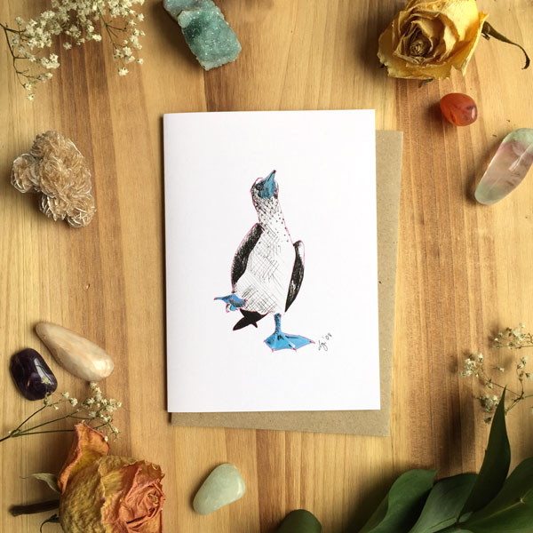 Blue Footed Booby Card by Darcy Goedecke