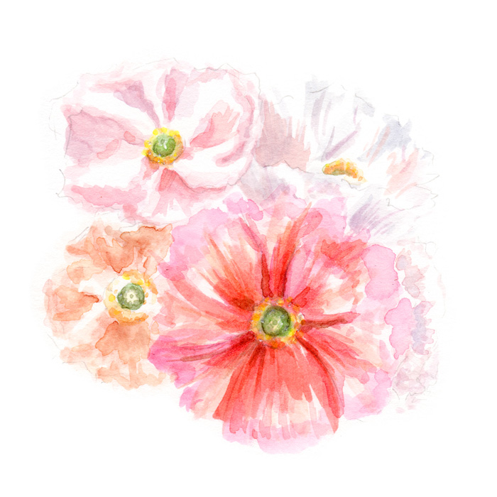 Spring Poppies | Watercolor by Darcy Goedecke
