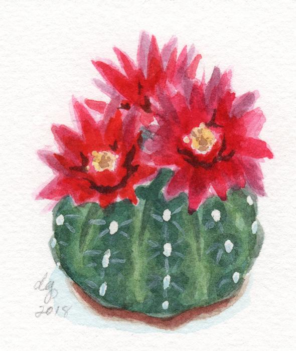 Cacti1Web