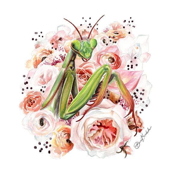 Mantis by Darcy Goedecke