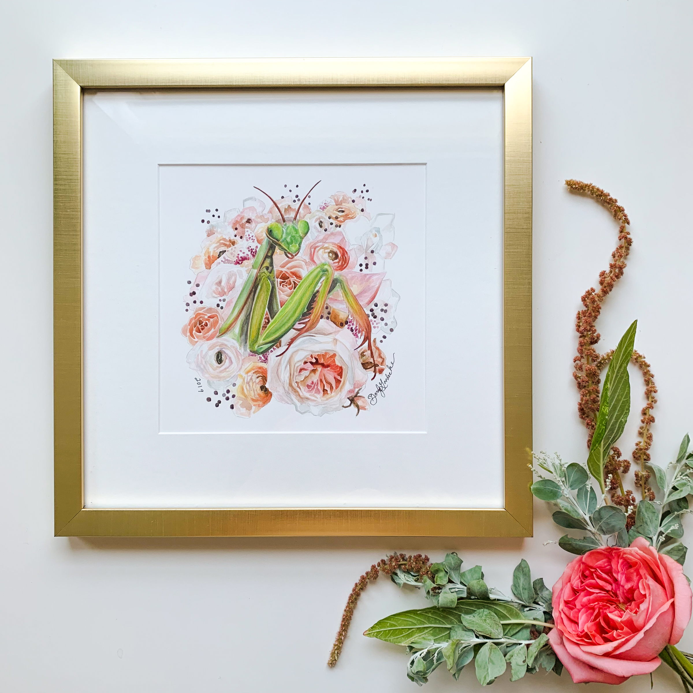 Mantis watercolor painting by Darcy Goedecke